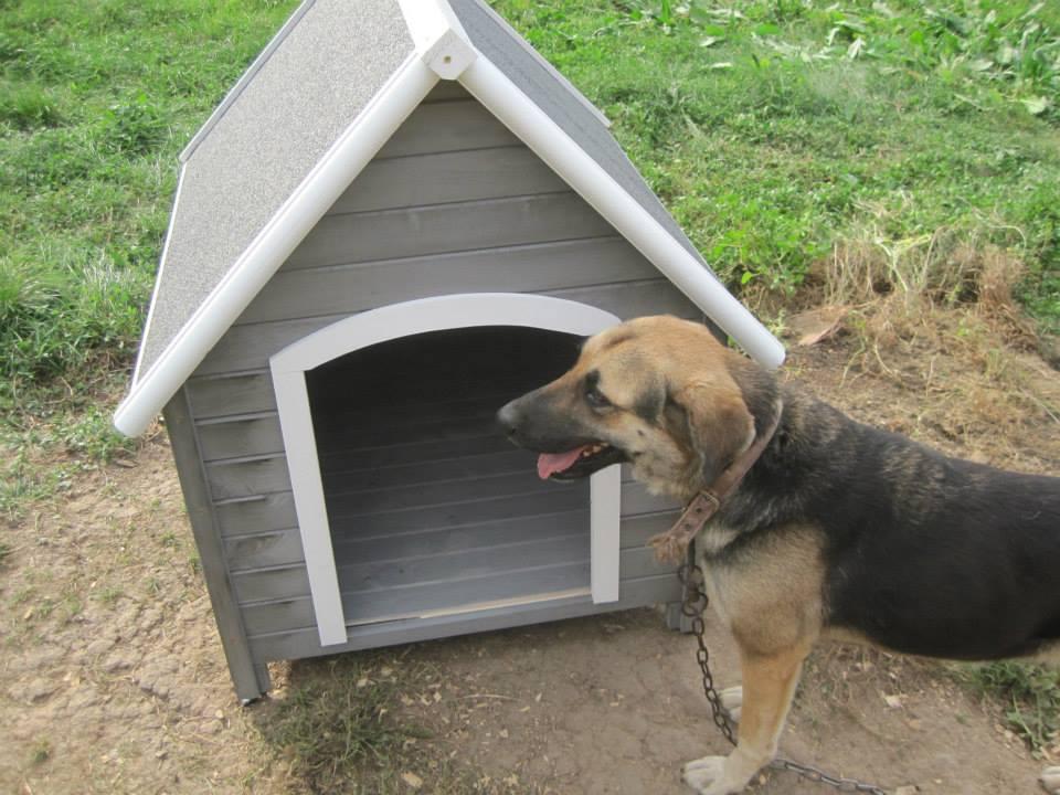 municipal-shelter